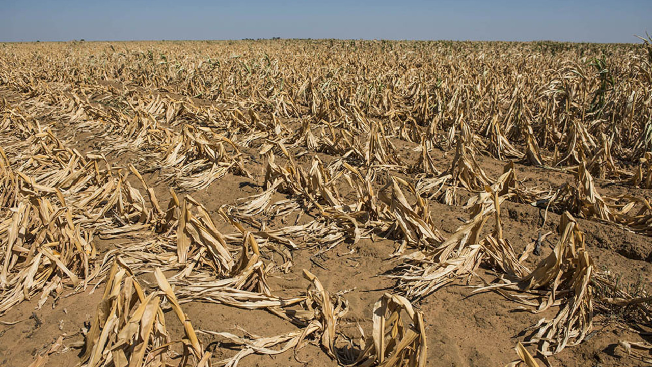 Climate Change's Impact on Your Plate